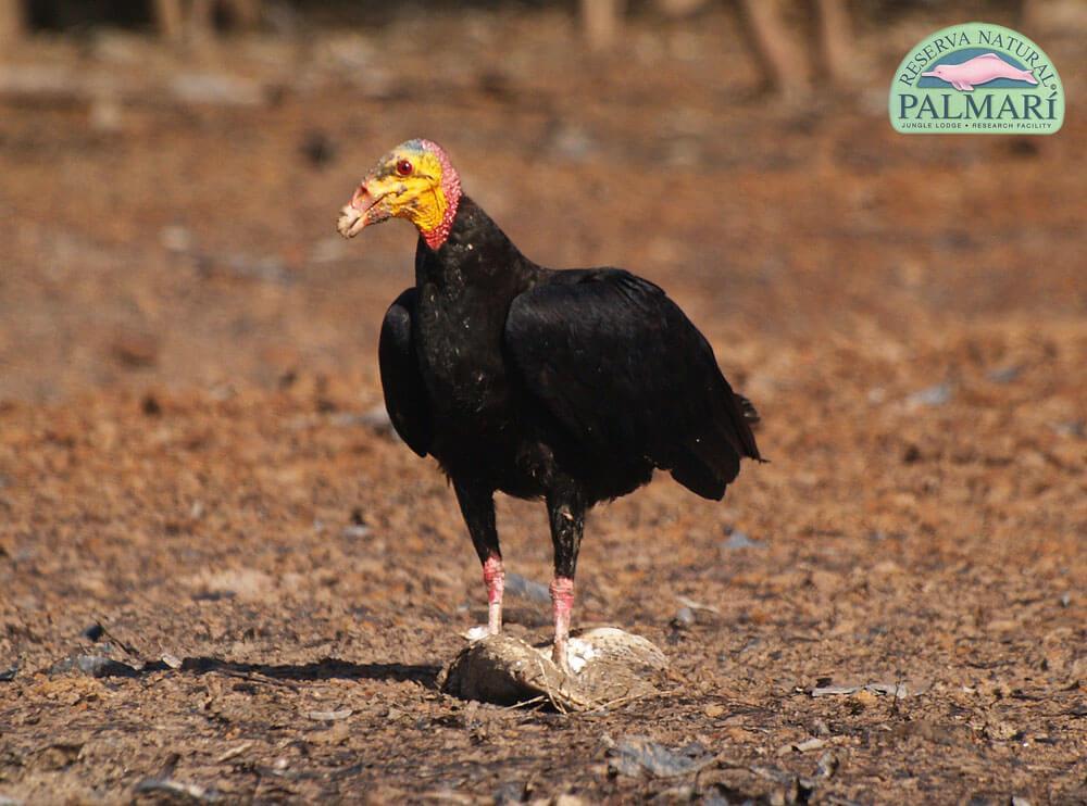 Reserva-Natural-Palmari-Birding-04