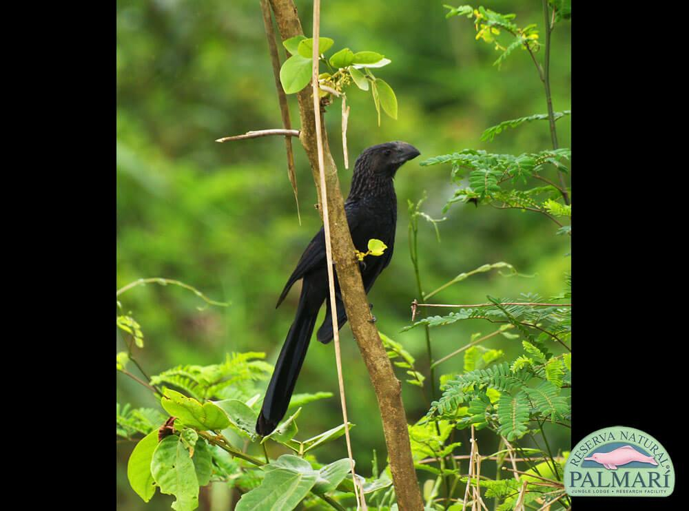 Reserva-Natural-Palmari-Birding-18