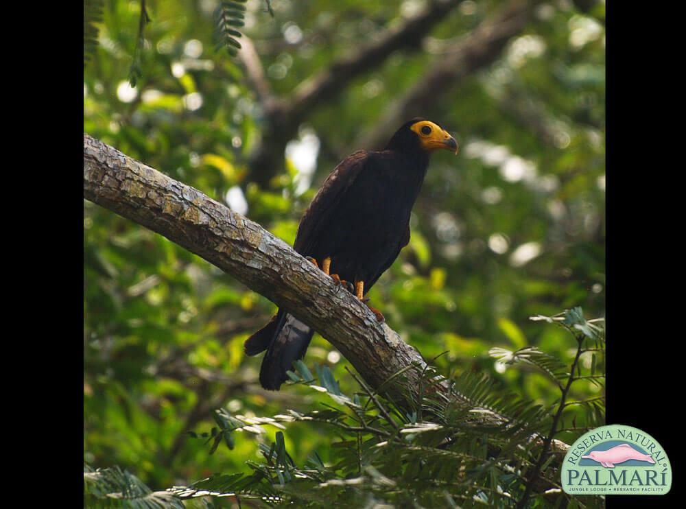 Reserva-Natural-Palmari-Birding-19