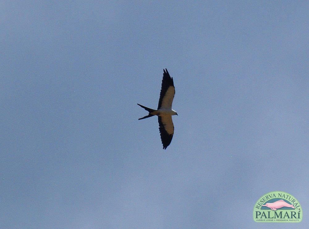 Reserva-Natural-Palmari-Birding-20
