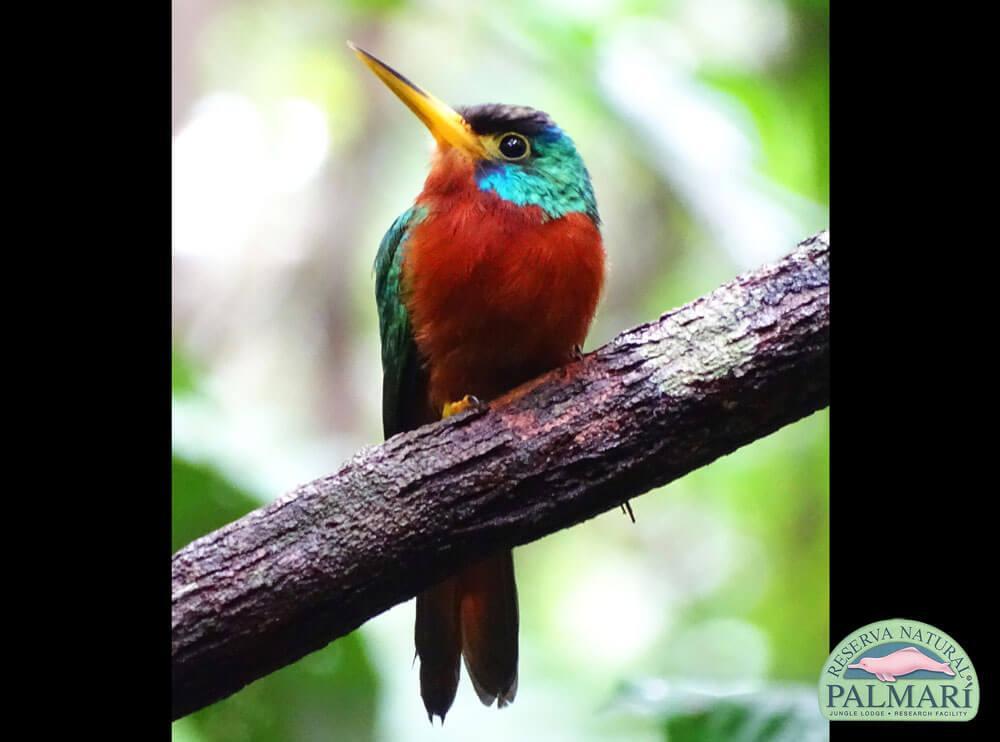 Reserva-Natural-Palmari-Birding-23