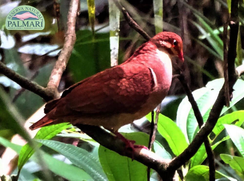 Reserva-Natural-Palmari-Birding-26