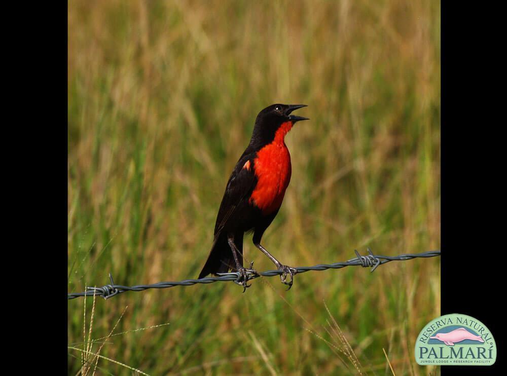 Reserva-Natural-Palmari-Birding-29