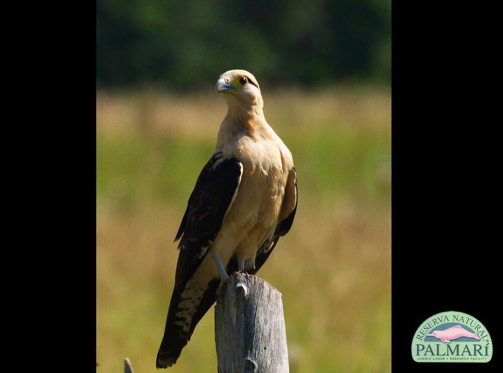 Reserva-Natural-Palmari-Birding-32
