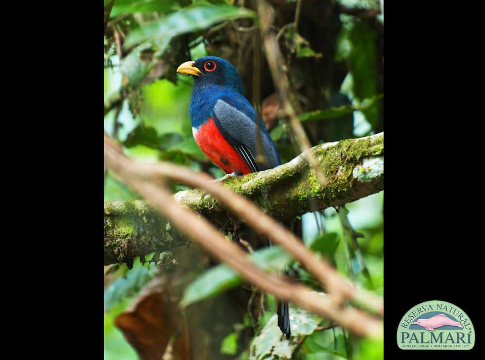 Reserva-Natural-Palmari-Birding-35