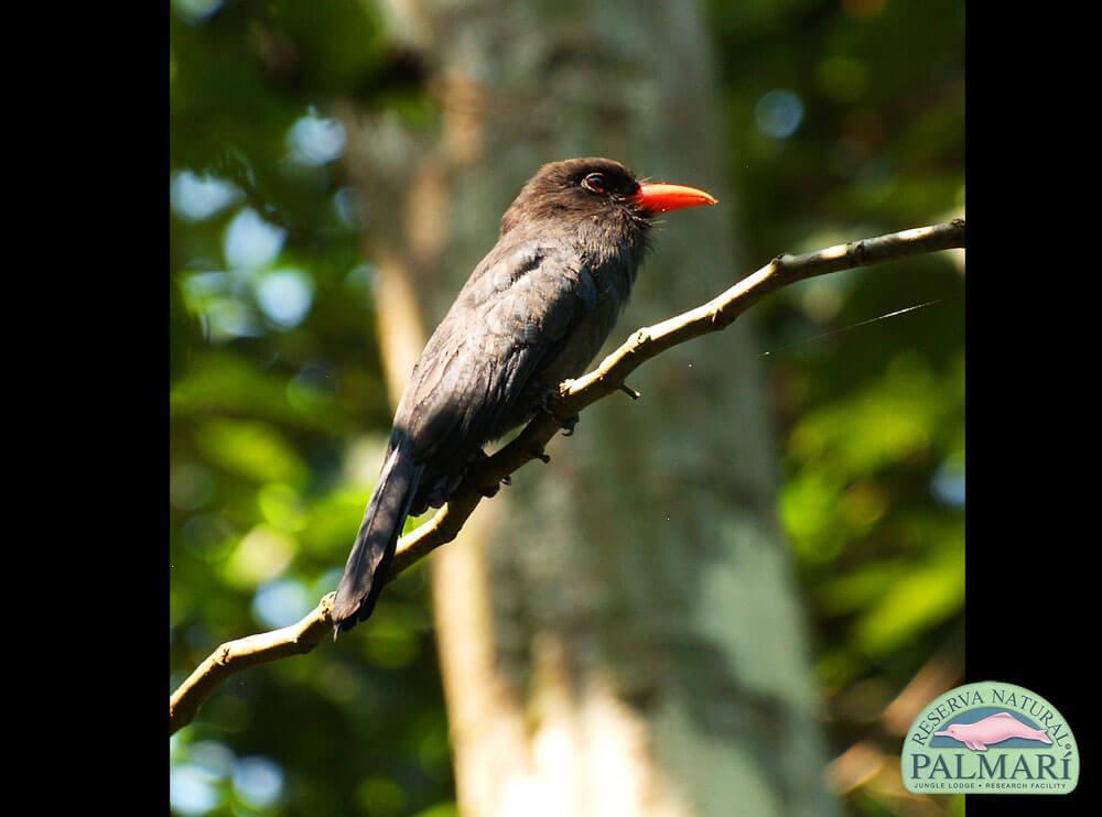 Reserva-Natural-Palmari-Birding-36