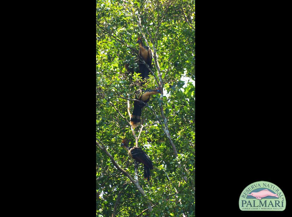 Reserva-Natural-Palmari-Birding-39