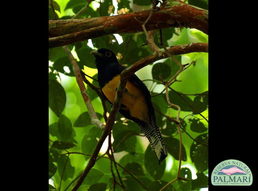 Reserva-Natural-Palmari-Birding-40