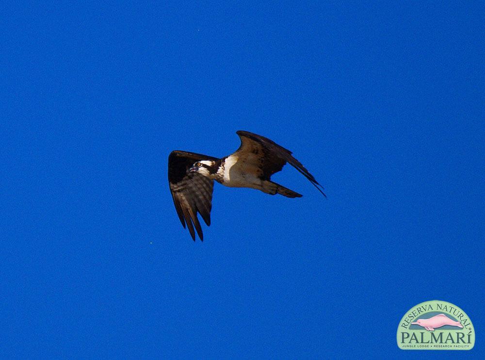 Reserva-Natural-Palmari-Birding-41