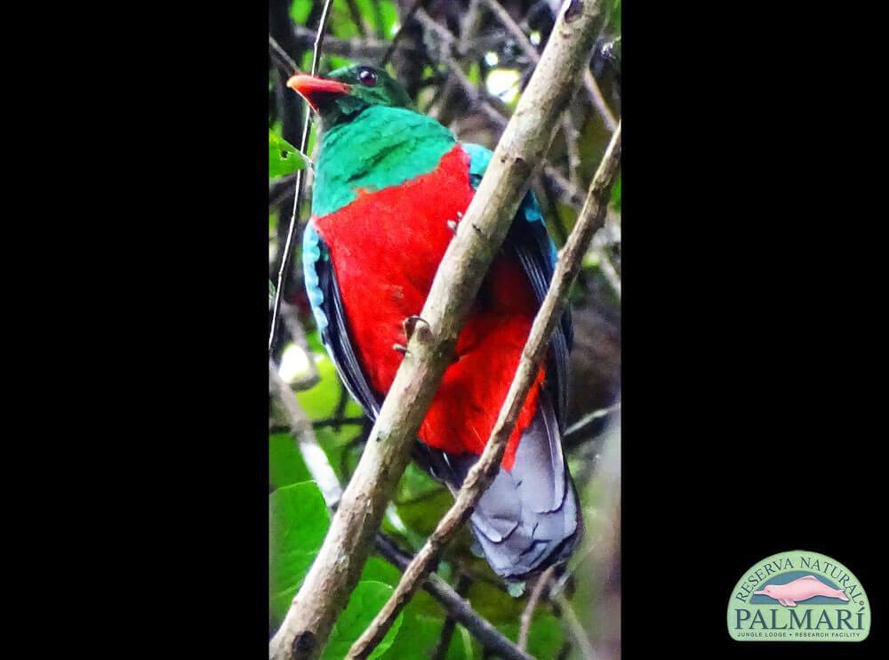 Reserva-Natural-Palmari-Birding-43