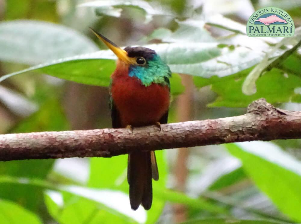 Reserva-Natural-Palmari-Birding-47