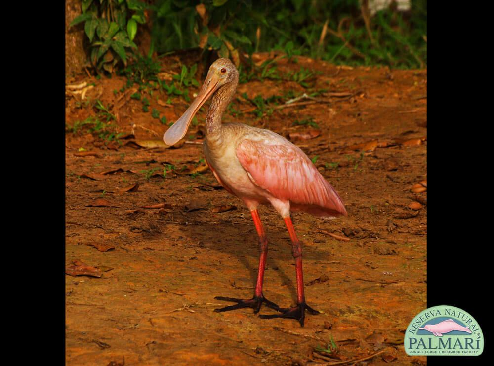 Reserva-Natural-Palmari-Birding-48