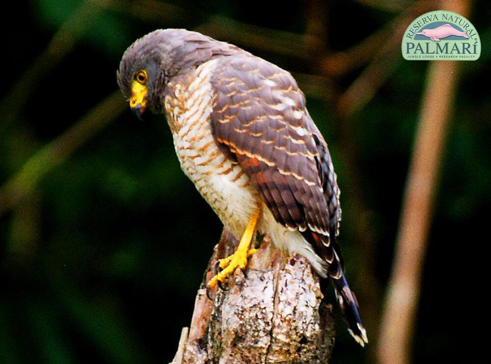 Reserva-Natural-Palmari-Birding-55