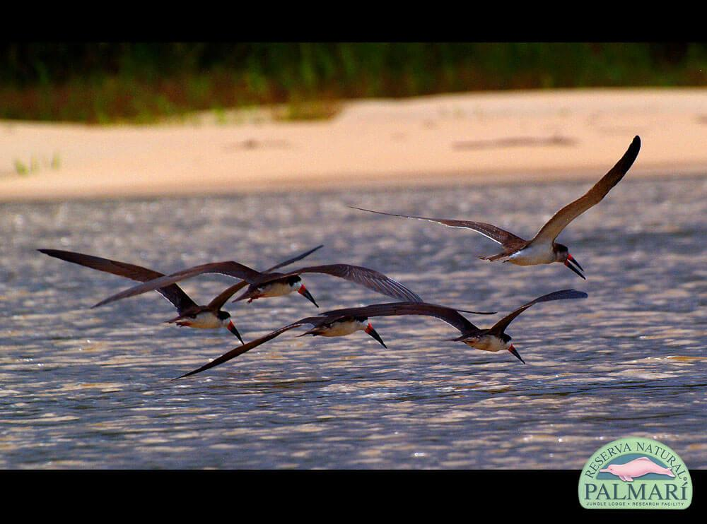 Reserva-Natural-Palmari-Birding-56