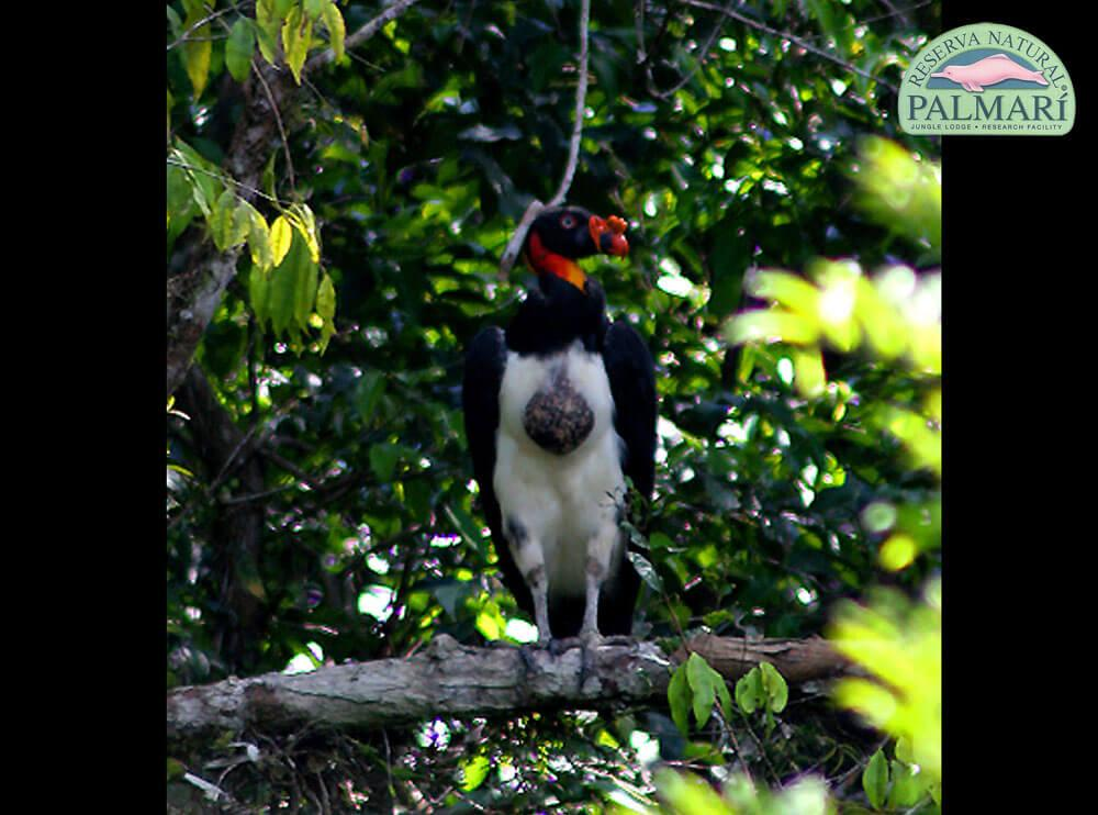 Reserva-Natural-Palmari-Birding-57