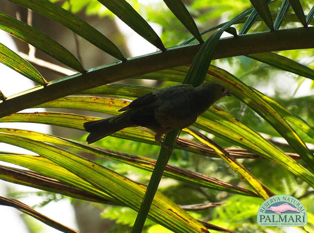 Reserva-Natural-Palmari-Birding-61