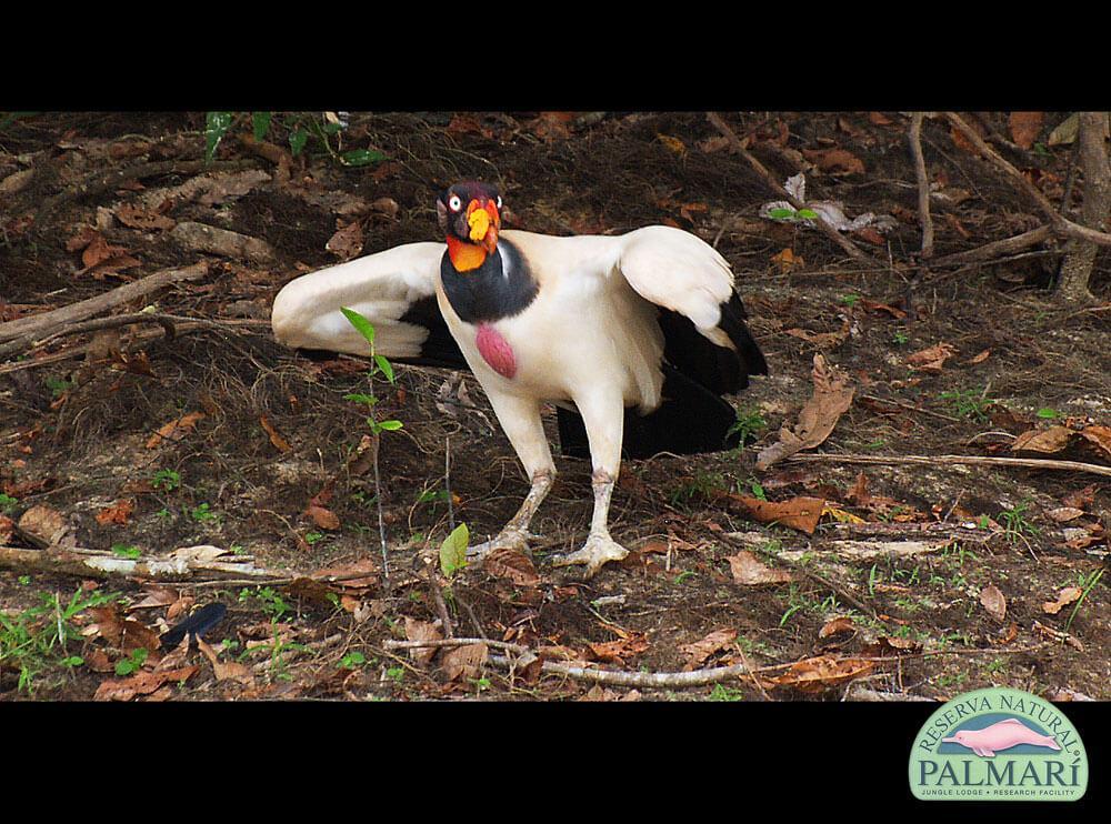 Reserva-Natural-Palmari-Birding-62