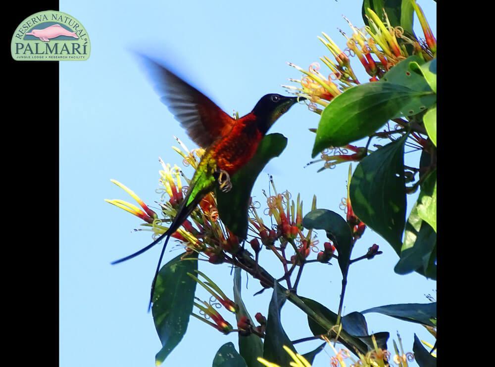 Reserva-Natural-Palmari-Birding-63