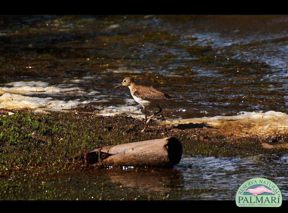 Reserva-Natural-Palmari-Birding-64