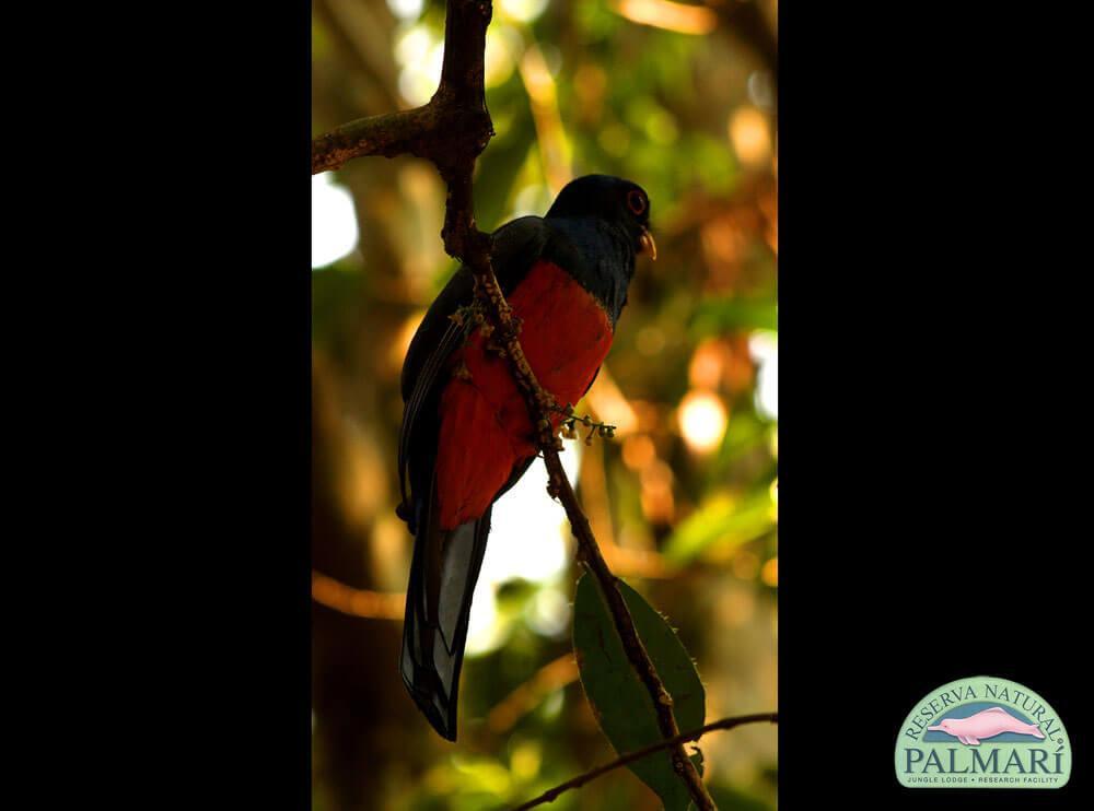 Reserva-Natural-Palmari-Birding-65
