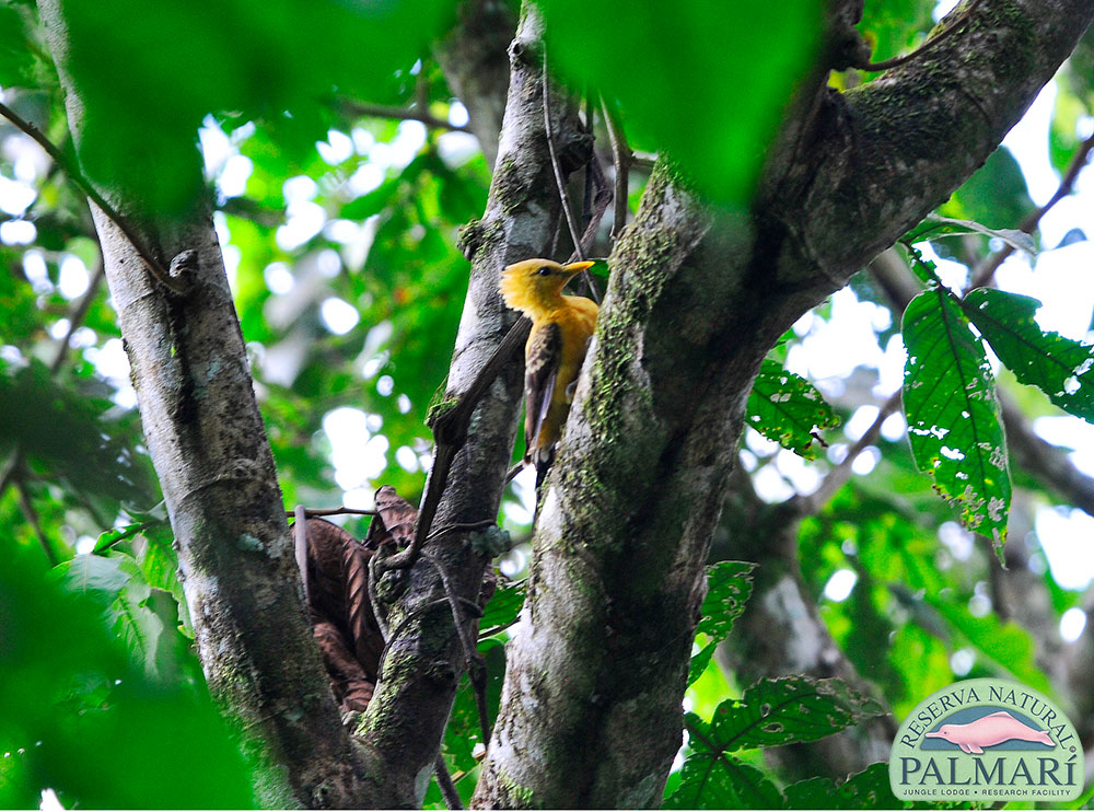 Reserva-Natural-Palmari-Birding-67