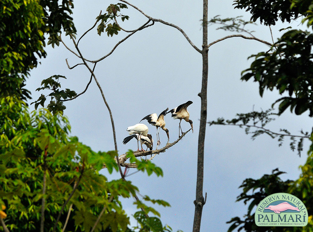 Reserva-Natural-Palmari-Birding-69