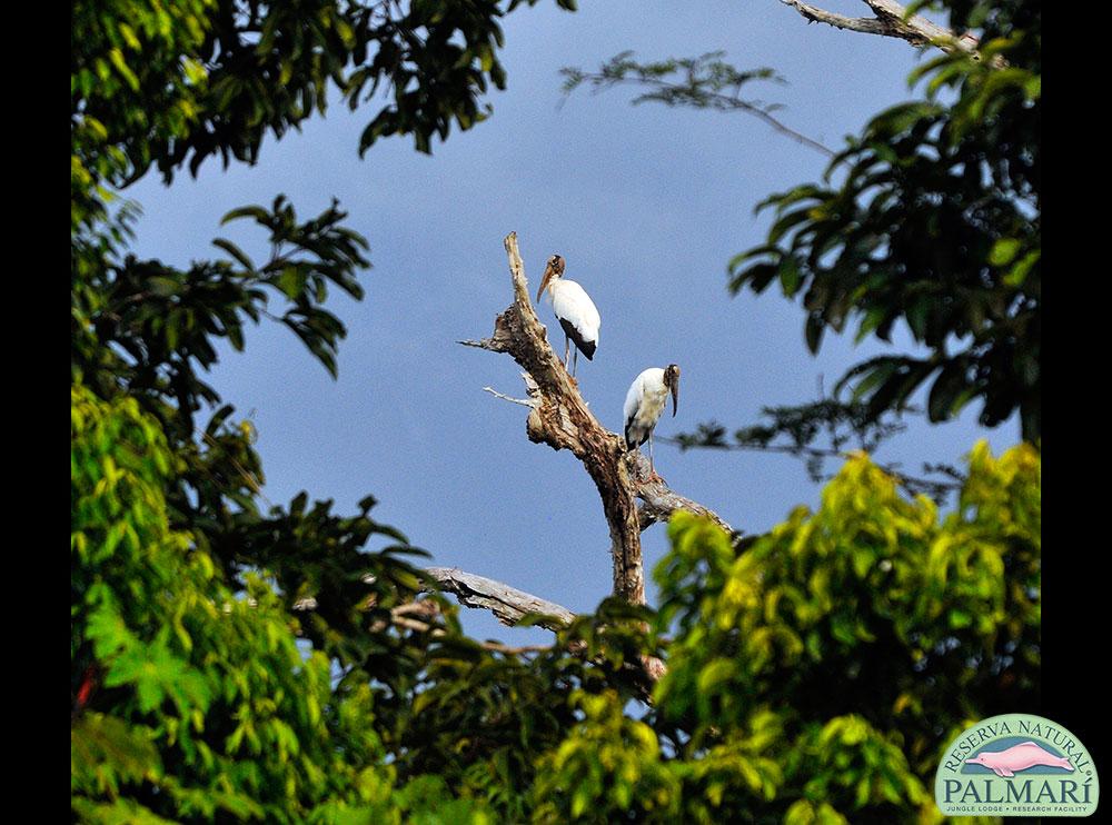 Reserva-Natural-Palmari-Birding-70