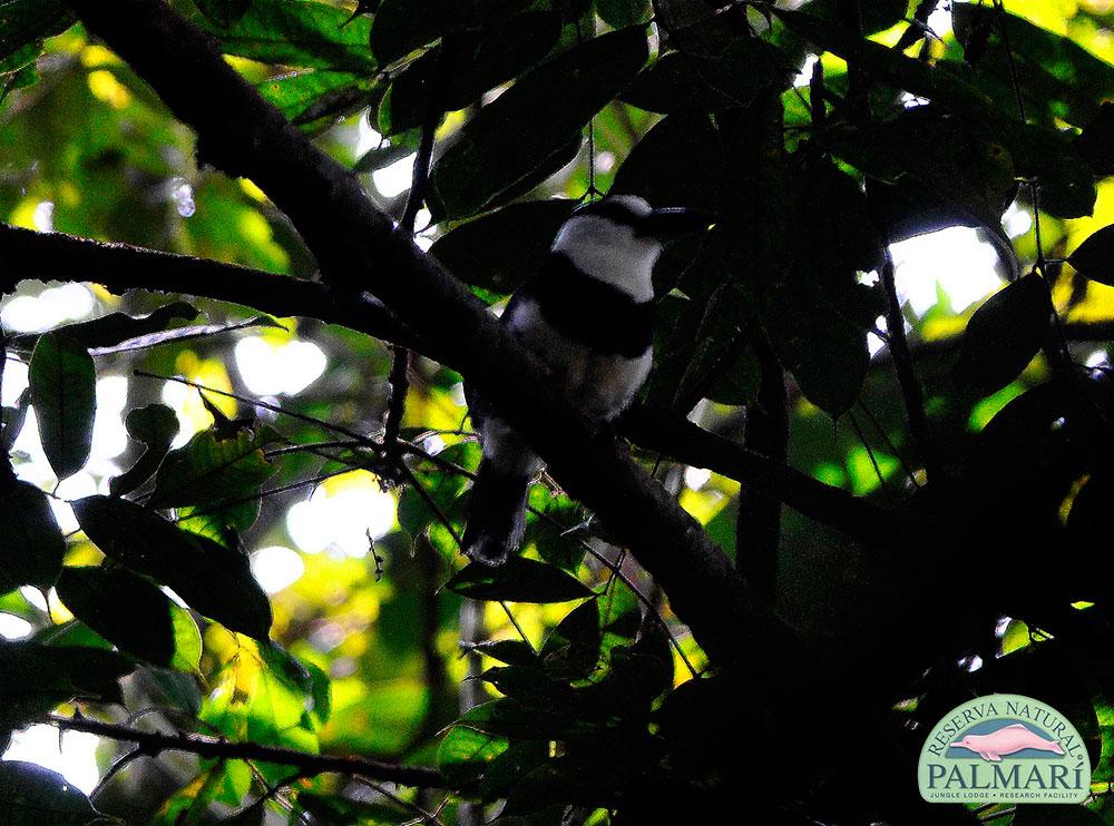 Reserva-Natural-Palmari-Birding-71