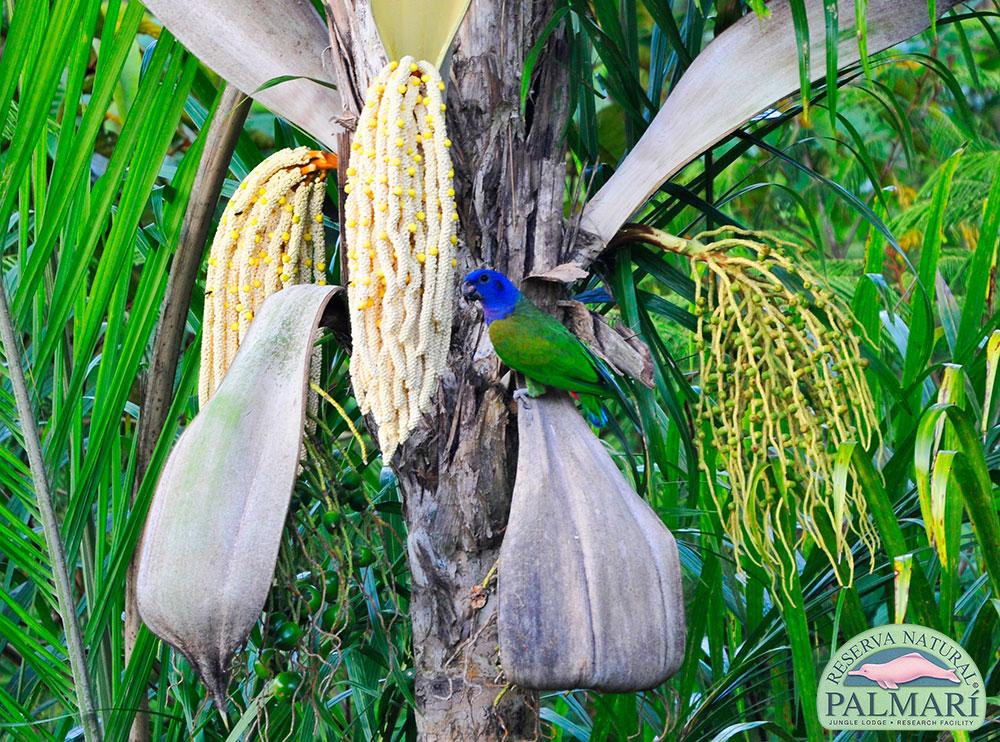 Reserva-Natural-Palmari-Birding-72