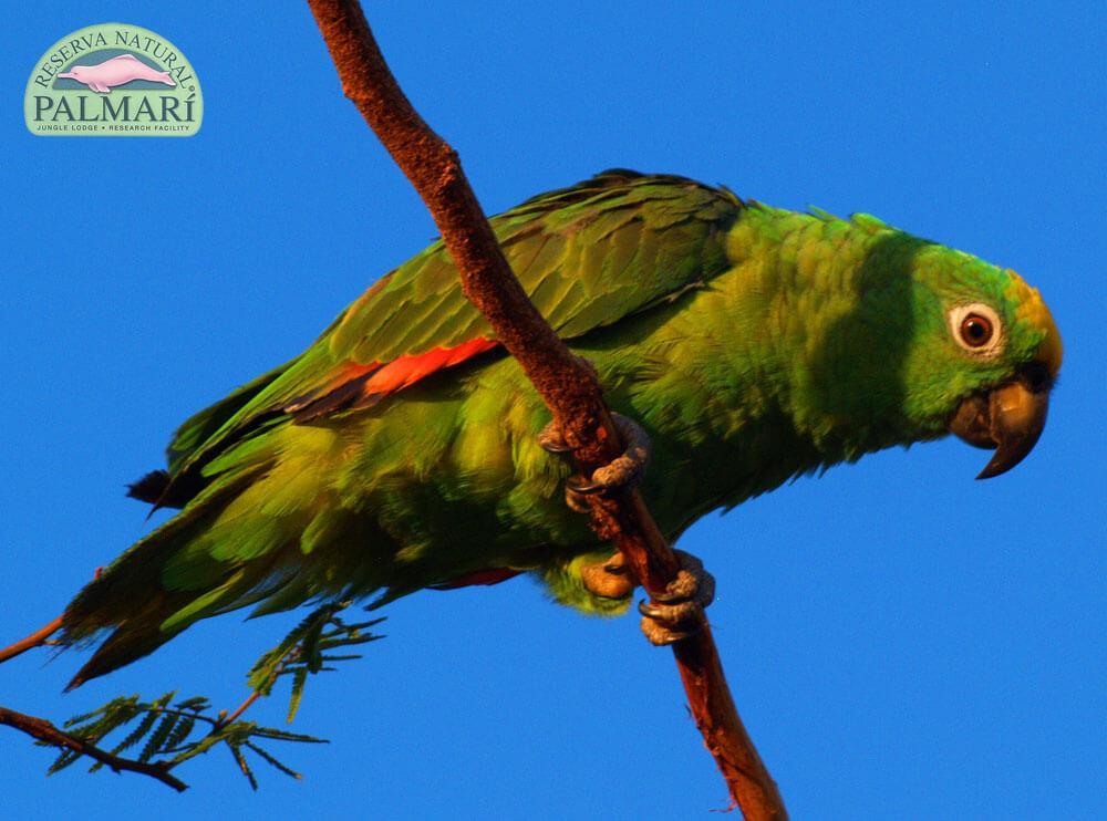 Reserva-Natural-Palmari-Fauna-001