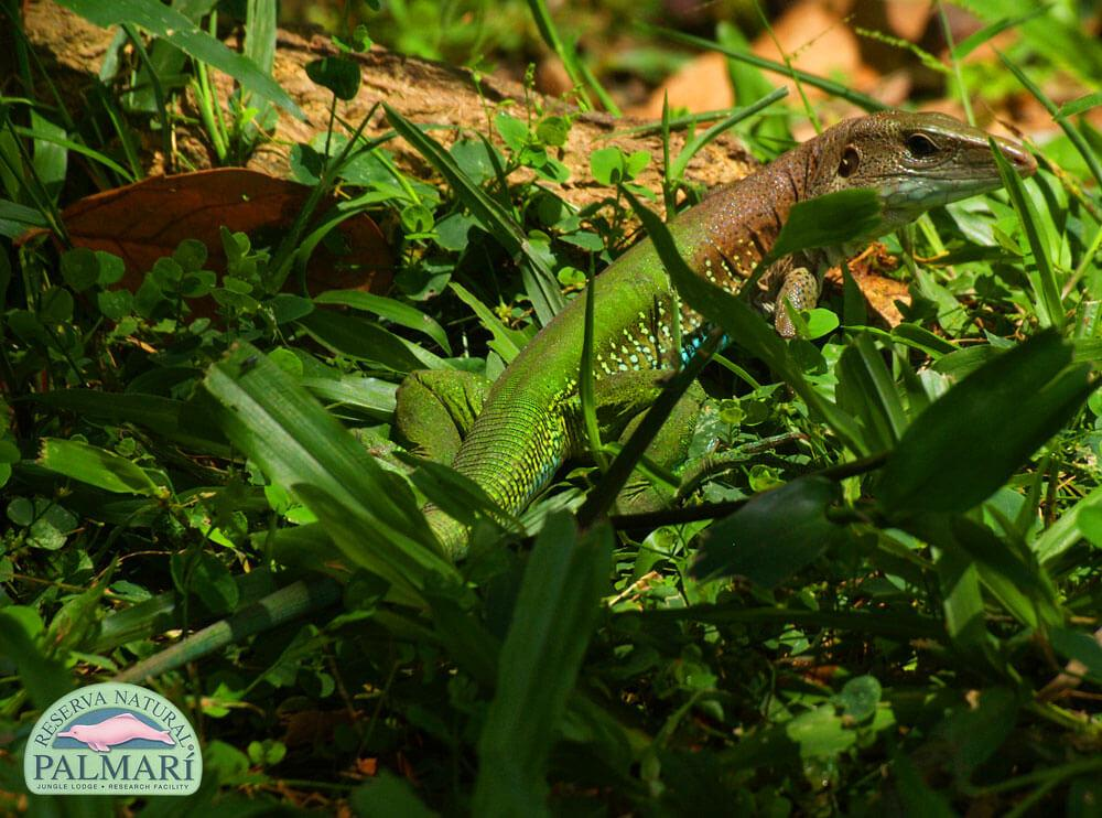 Reserva-Natural-Palmari-Fauna-002