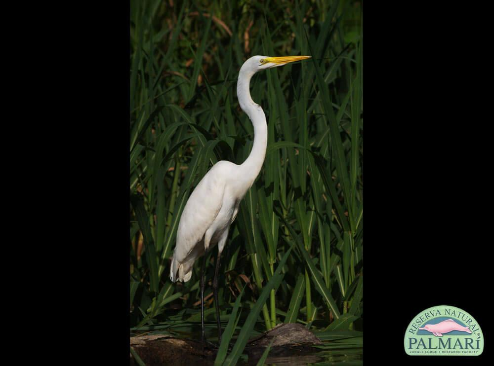 Reserva-Natural-Palmari-Fauna-003