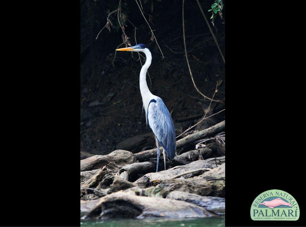 Reserva-Natural-Palmari-Fauna-005
