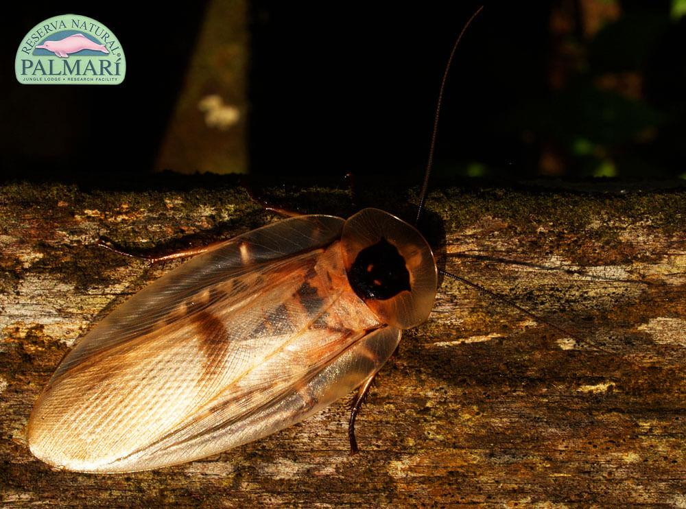 Reserva-Natural-Palmari-Fauna-006