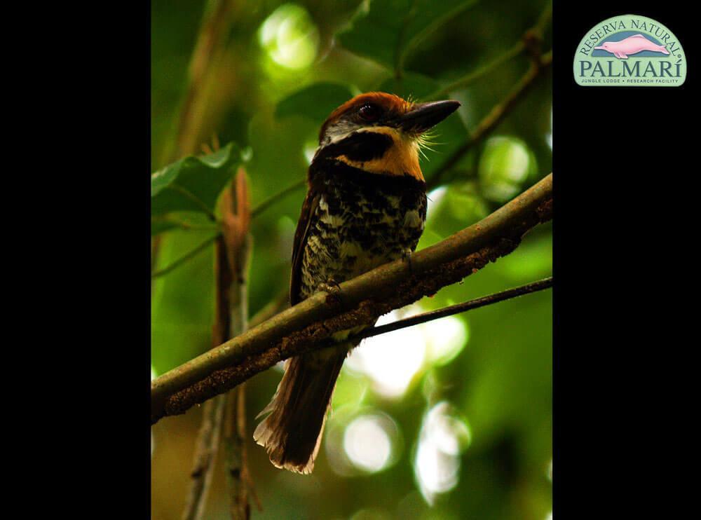 Reserva-Natural-Palmari-Fauna-007