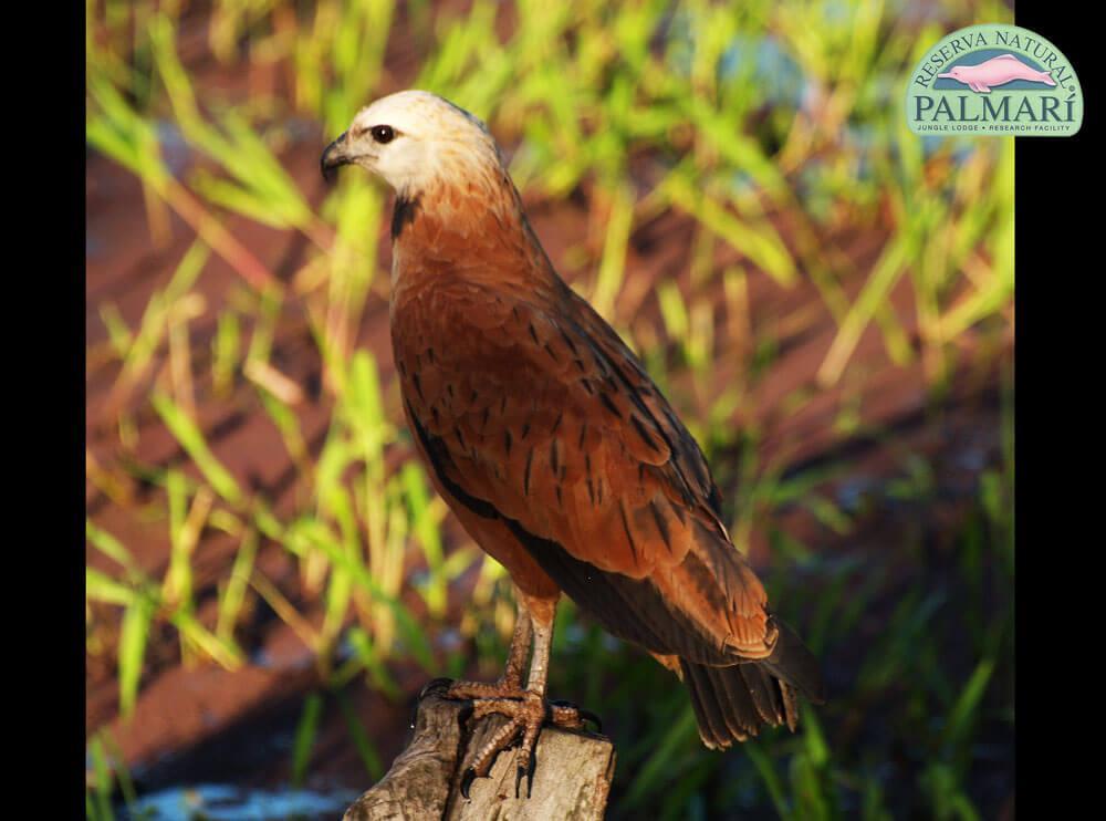 Reserva-Natural-Palmari-Fauna-009