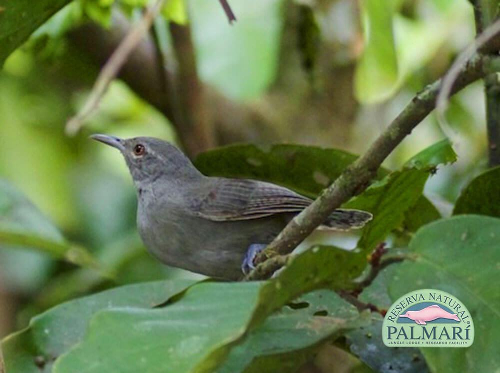 Reserva-Natural-Palmari-Fauna-011
