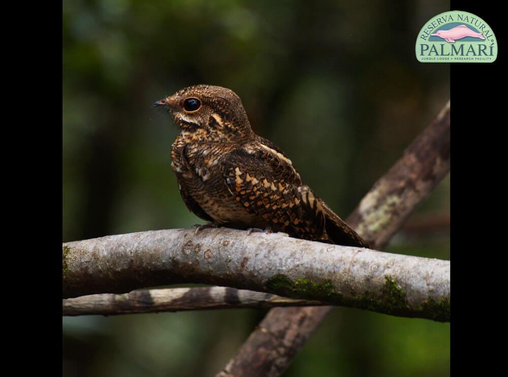 Reserva-Natural-Palmari-Fauna-013