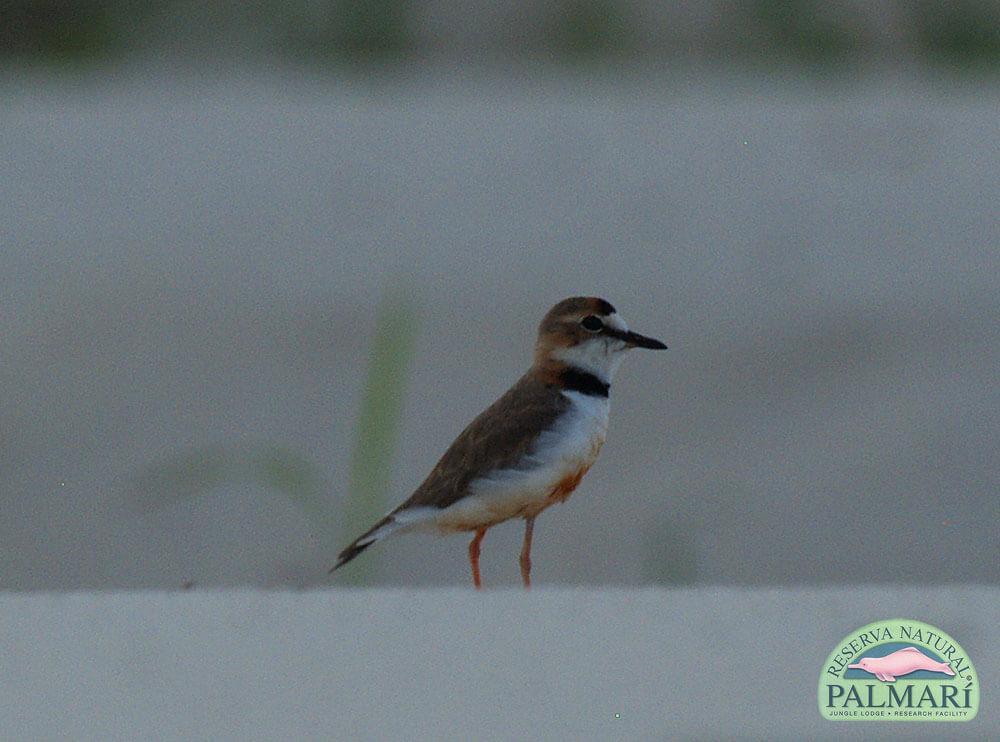 Reserva-Natural-Palmari-Fauna-017