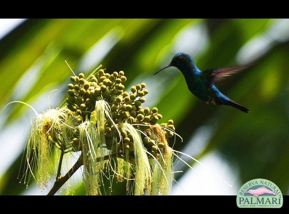 Reserva-Natural-Palmari-Fauna-018