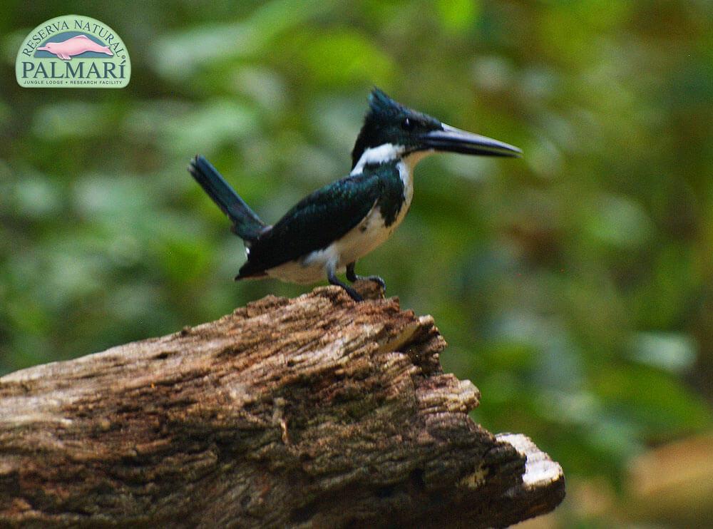 Reserva-Natural-Palmari-Fauna-019