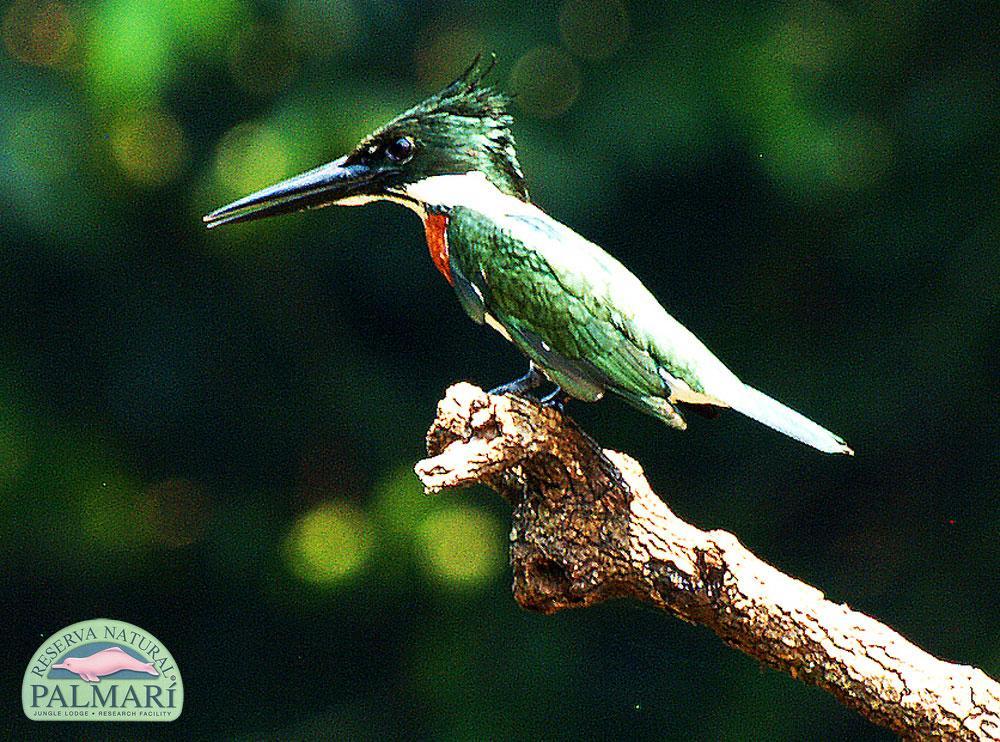 Reserva-Natural-Palmari-Fauna-021