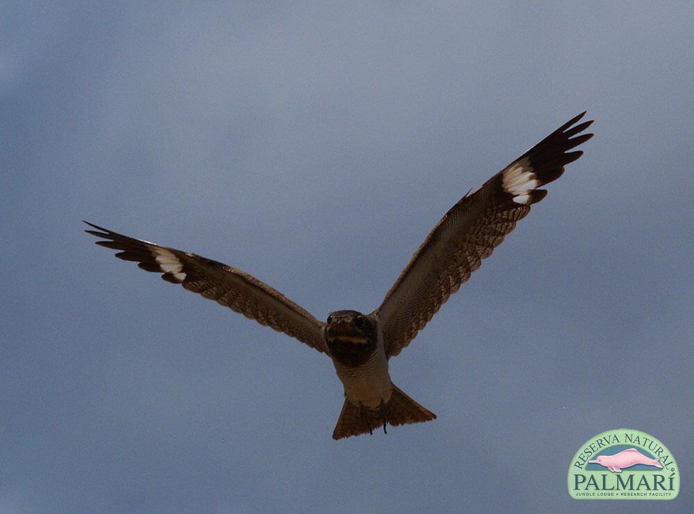Reserva-Natural-Palmari-Fauna-022