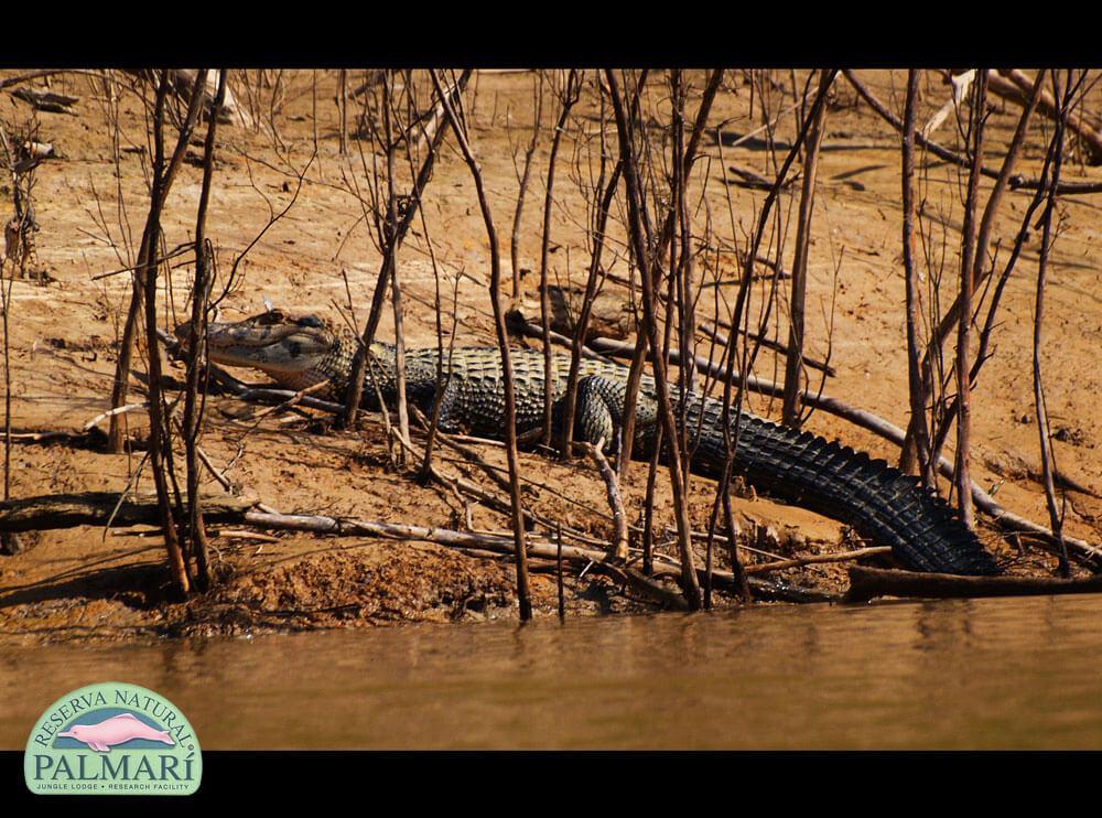 Reserva-Natural-Palmari-Fauna-025