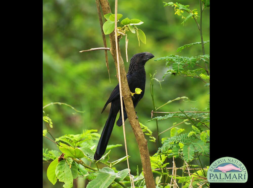 Reserva-Natural-Palmari-Fauna-026