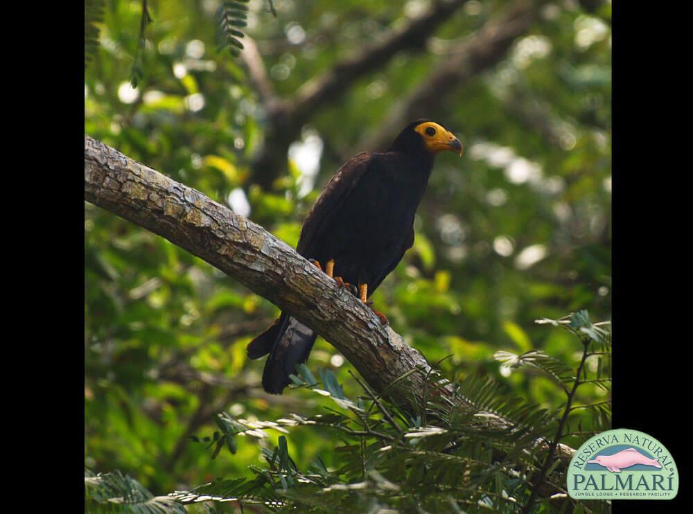 Reserva-Natural-Palmari-Fauna-027