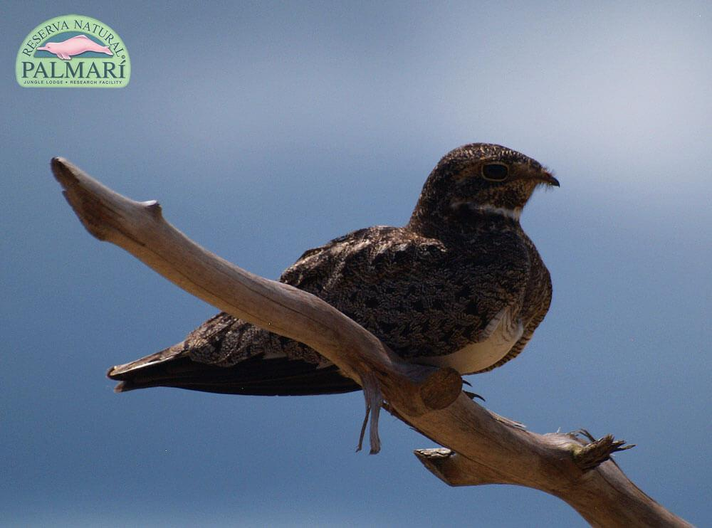 Reserva-Natural-Palmari-Fauna-029