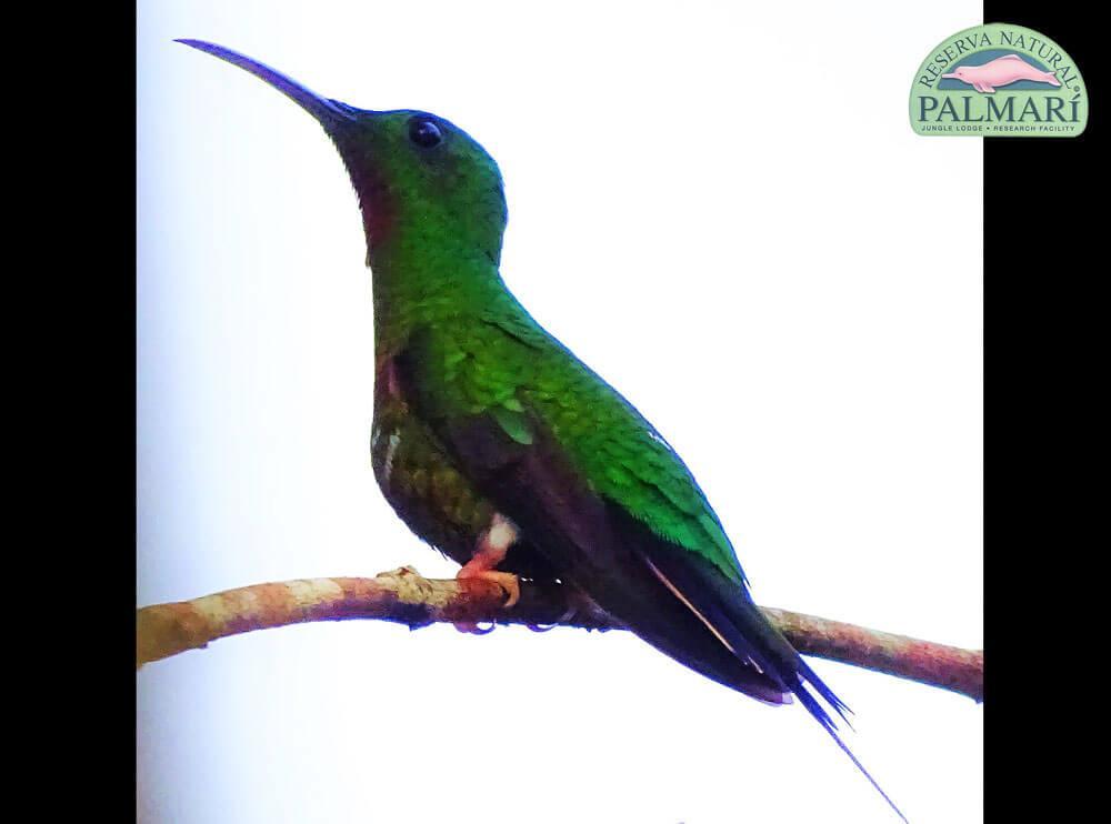 Reserva-Natural-Palmari-Fauna-030