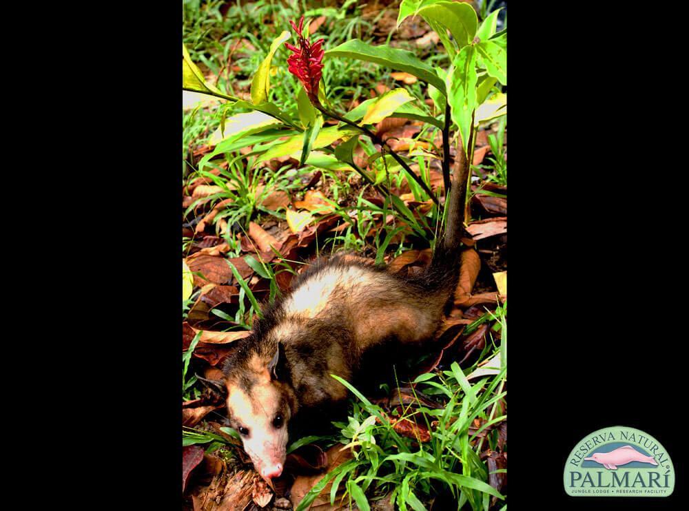 Reserva-Natural-Palmari-Fauna-031