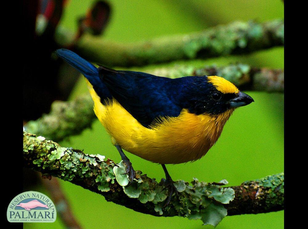 Reserva-Natural-Palmari-Fauna-034